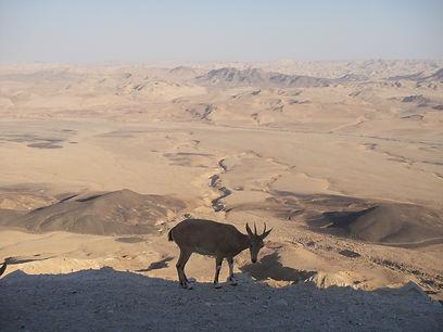 desert-186467_1920.jpg