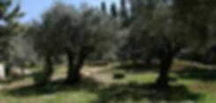 Mount of Olives_03.jpg