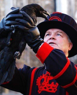 Raven Master holding raven