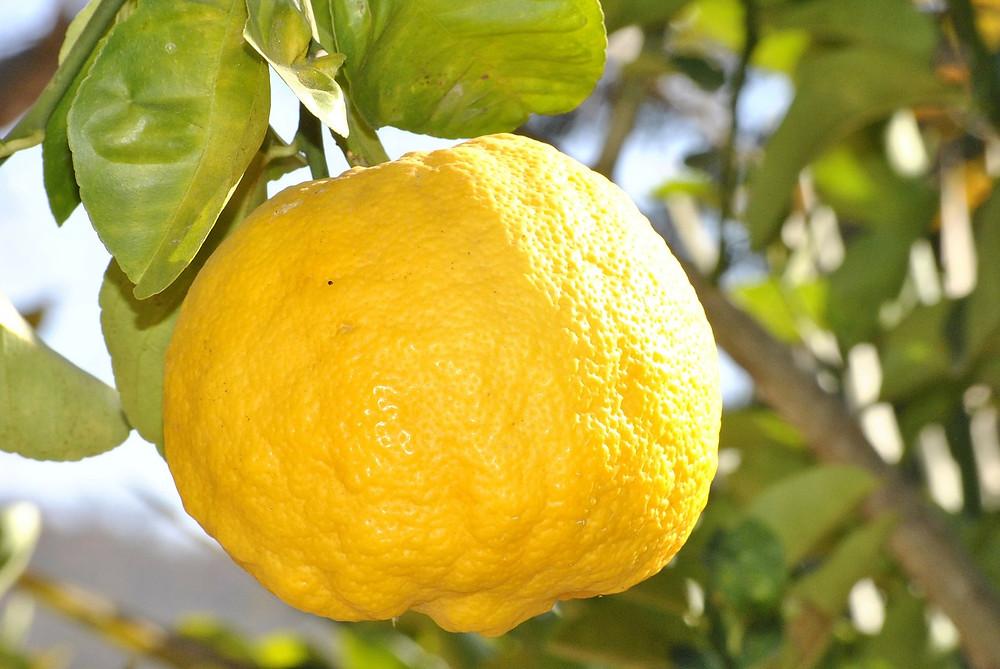lemon-181650_1280.jpg