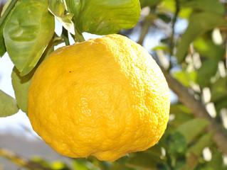 Amazing Lemons