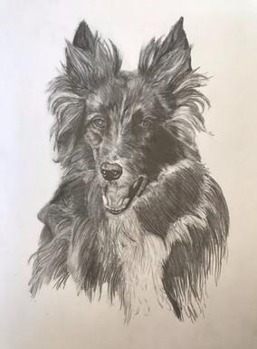 'Doggie'