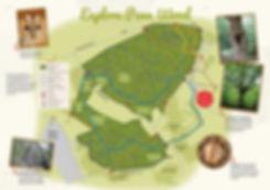 penn-wood-leaflet-2.jpg