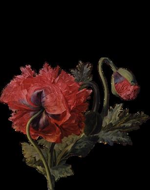 Цветок 8.png