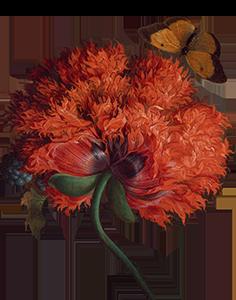 Цветок 4.png