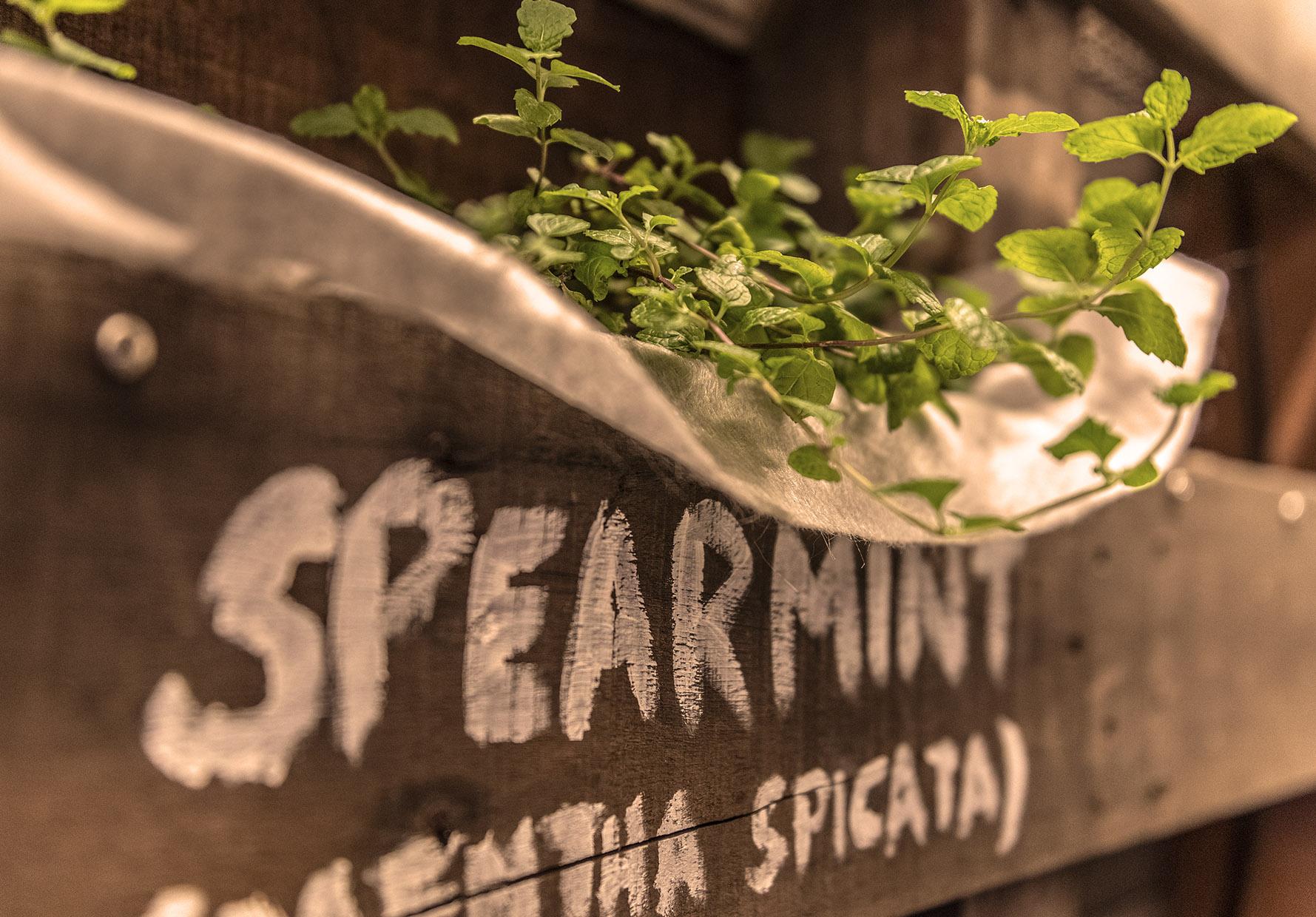 27 Spearmint