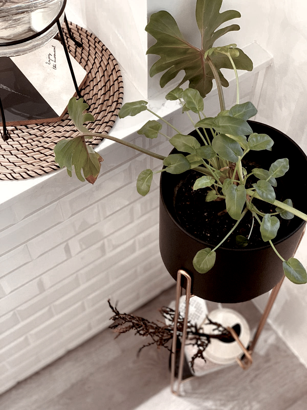 03 potted plant