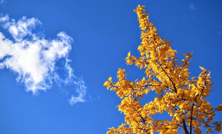 European Autumn Sunspots