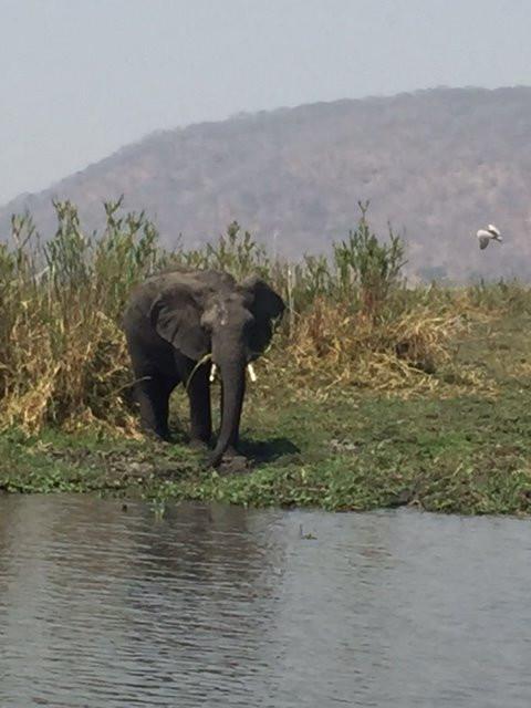 Safari in Malawi