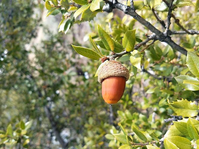 camp acorn