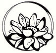 FPL-Lotus.jpg