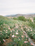 Ella Rose Farm-27.jpg