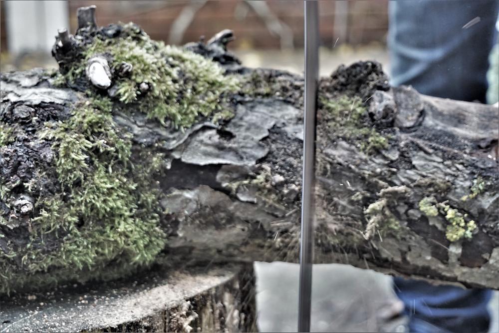 Holzverarbeitung | Dany Lahoud 2019