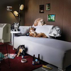 frontline-couchcats_v1-1.jpg