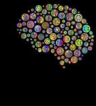 brain-4177256_1280.png