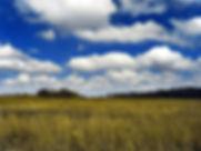cloudswithwheatfield.jpg