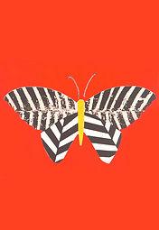 papillon vif