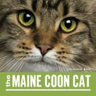Cat Cover.jpg