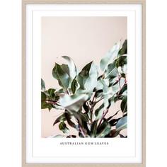 Australian Gum Leaves