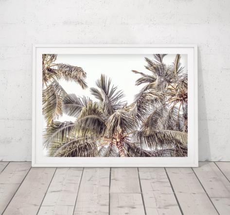 Them Palms