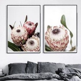 SET OF 2 - PROTEA I + PROTEA II