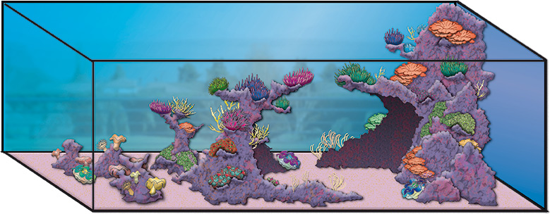 Aquarium marin