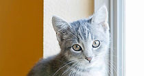 gray kitty 640X338.jpg