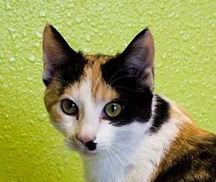 catb cropped.jpg