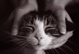 Les bienfaits des massages
