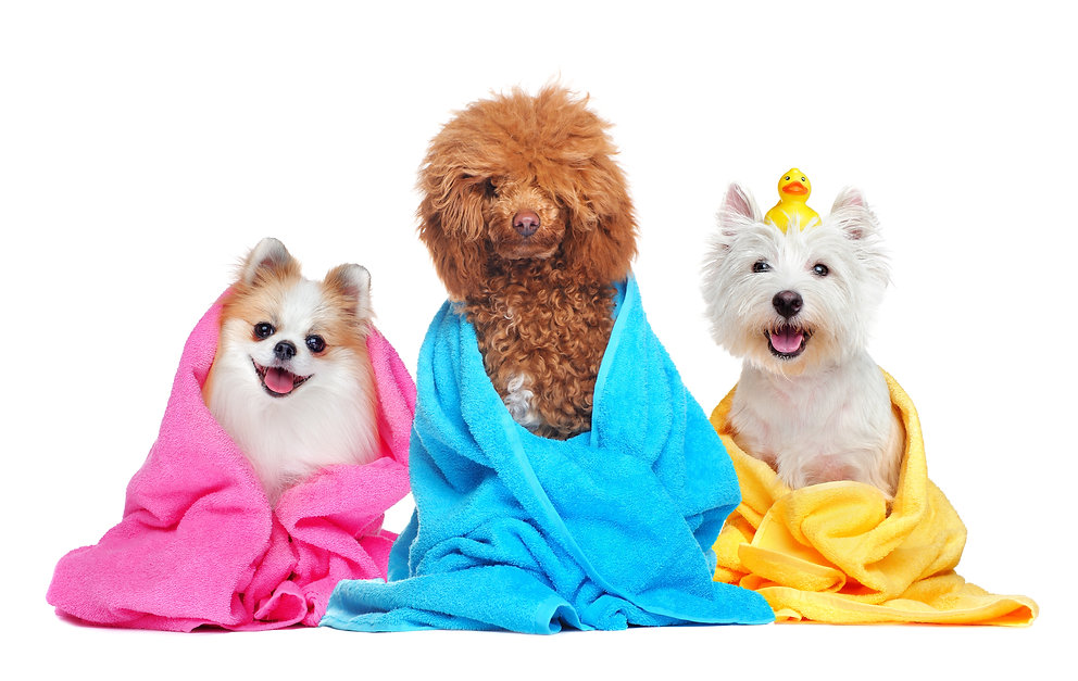 Three dogs in towels after bathing.jpg