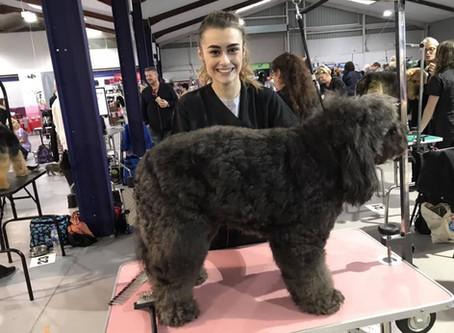 Corissa entered Ruffles into the British dog groomers championships Oct 2018