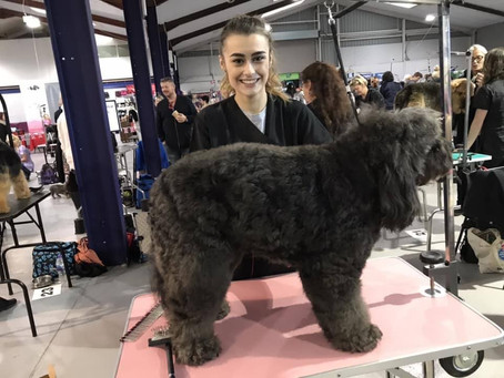 Corissa entered Ruffles into the British dog groomers championships Oct 2018