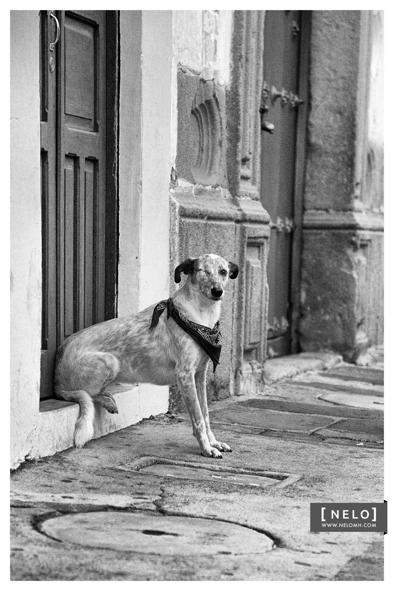 Mosca in Antigua Guatemala