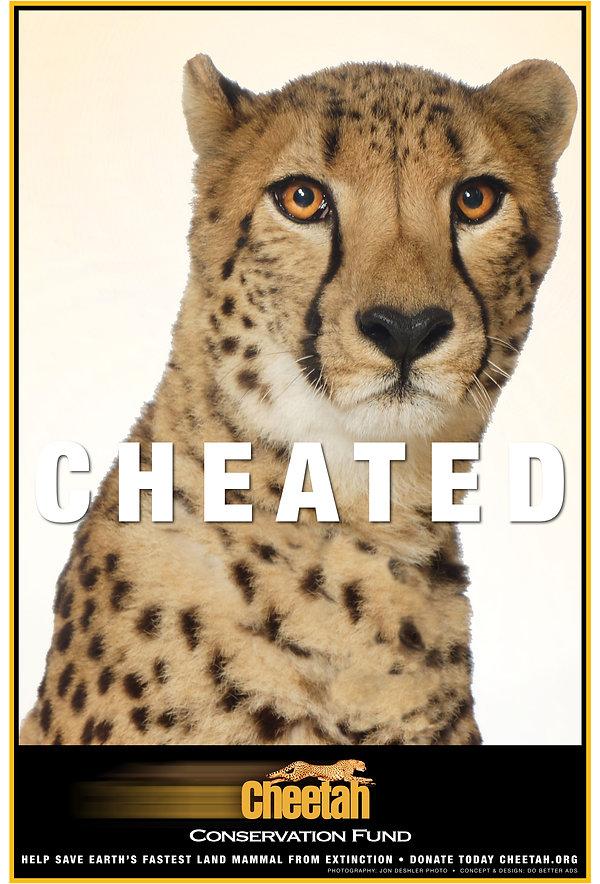 CheetahP2s.jpg