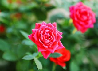 Raindrops on roses...