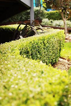 Gardening services Maintanance