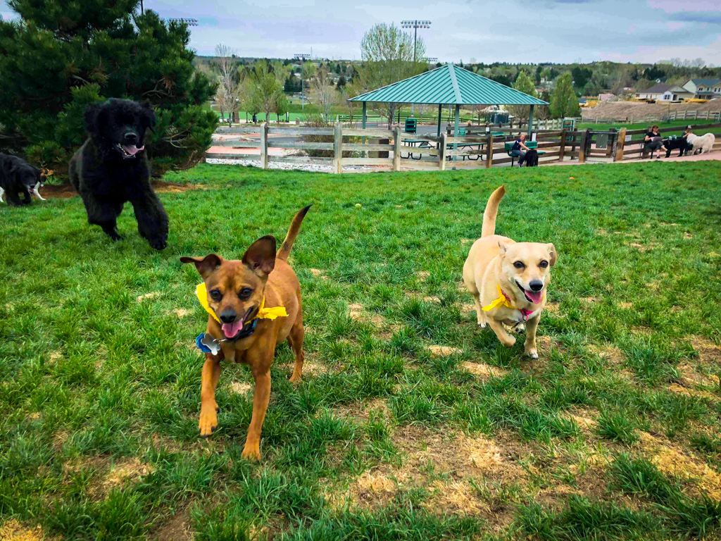 Doggy Playdates - buddies