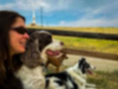 Doggy Playdates - Entertained.jpg