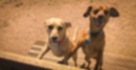 Doggy Playdates - Bench Buddies.jpg