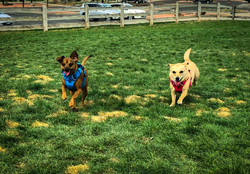 Doggy Playdates - small pals