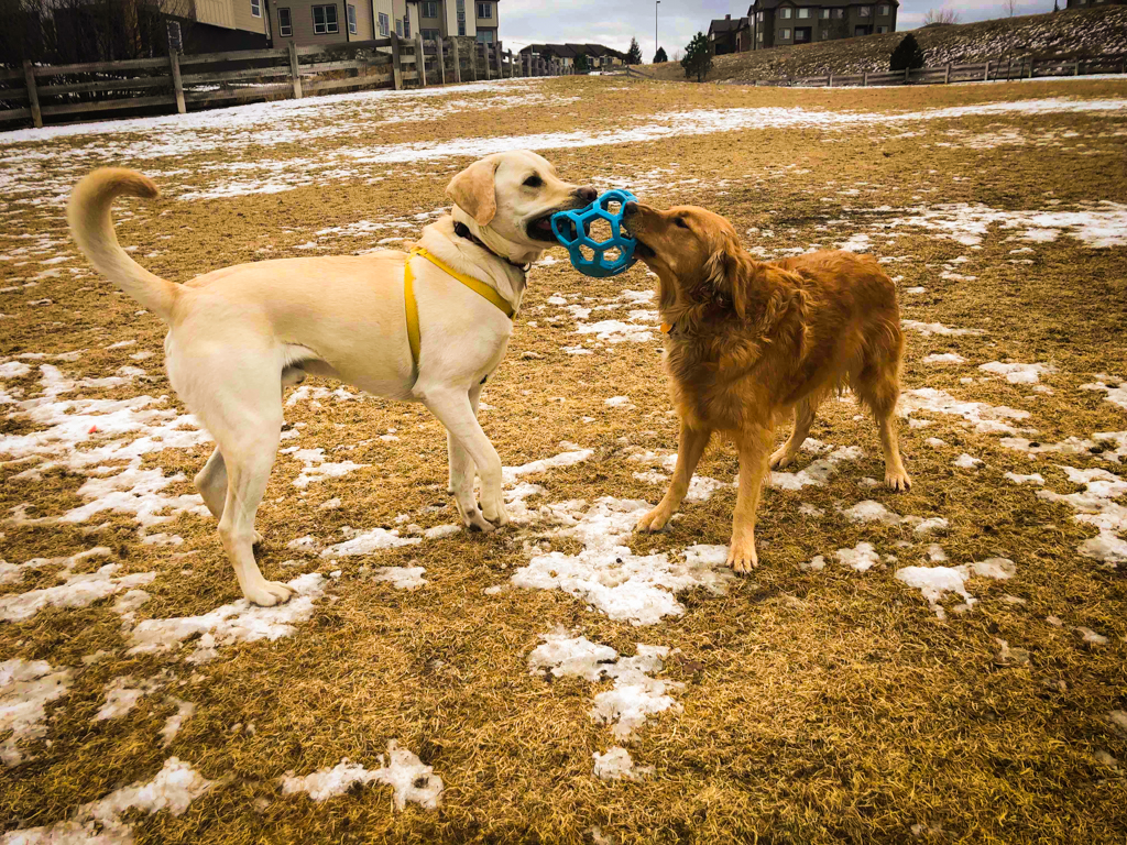 Doggy Playdates - Play Time