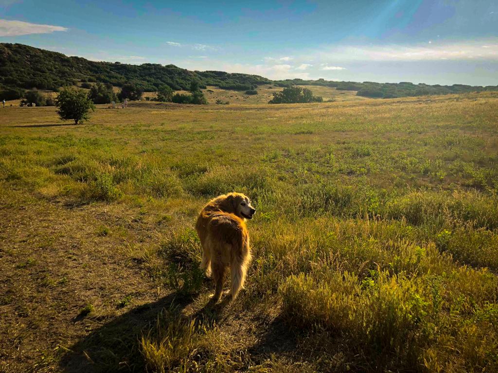 Doggy Playdates - Mountain Trail