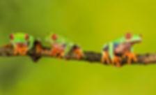 TreeFrogs homepage iStock-1047039262.jpg