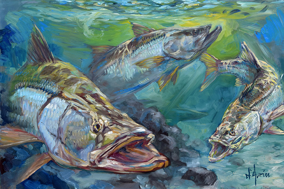 Inlet-Action-Robalo-snook-fishing-fine-a