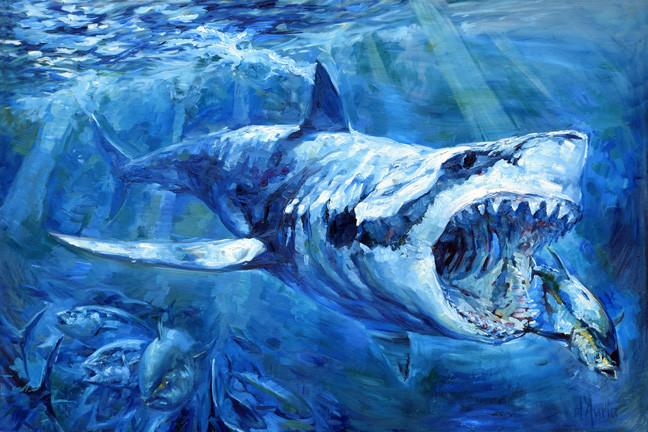 The-Hunt-great-white-shark-tuna-oil-pain