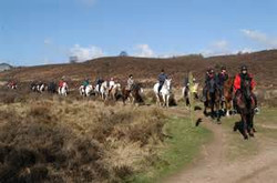 Cannock Chase Trekking Centre