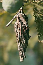 bagworms.jpg