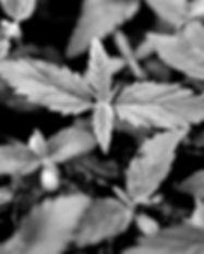 iStock-1194009029_edited_edited.jpg