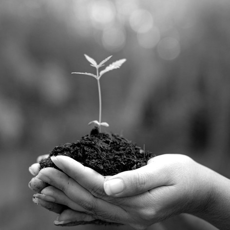 Growth in B2B Customer Segment