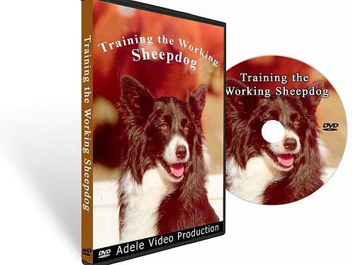 TRAINING THE WORKING SHEEPDOG